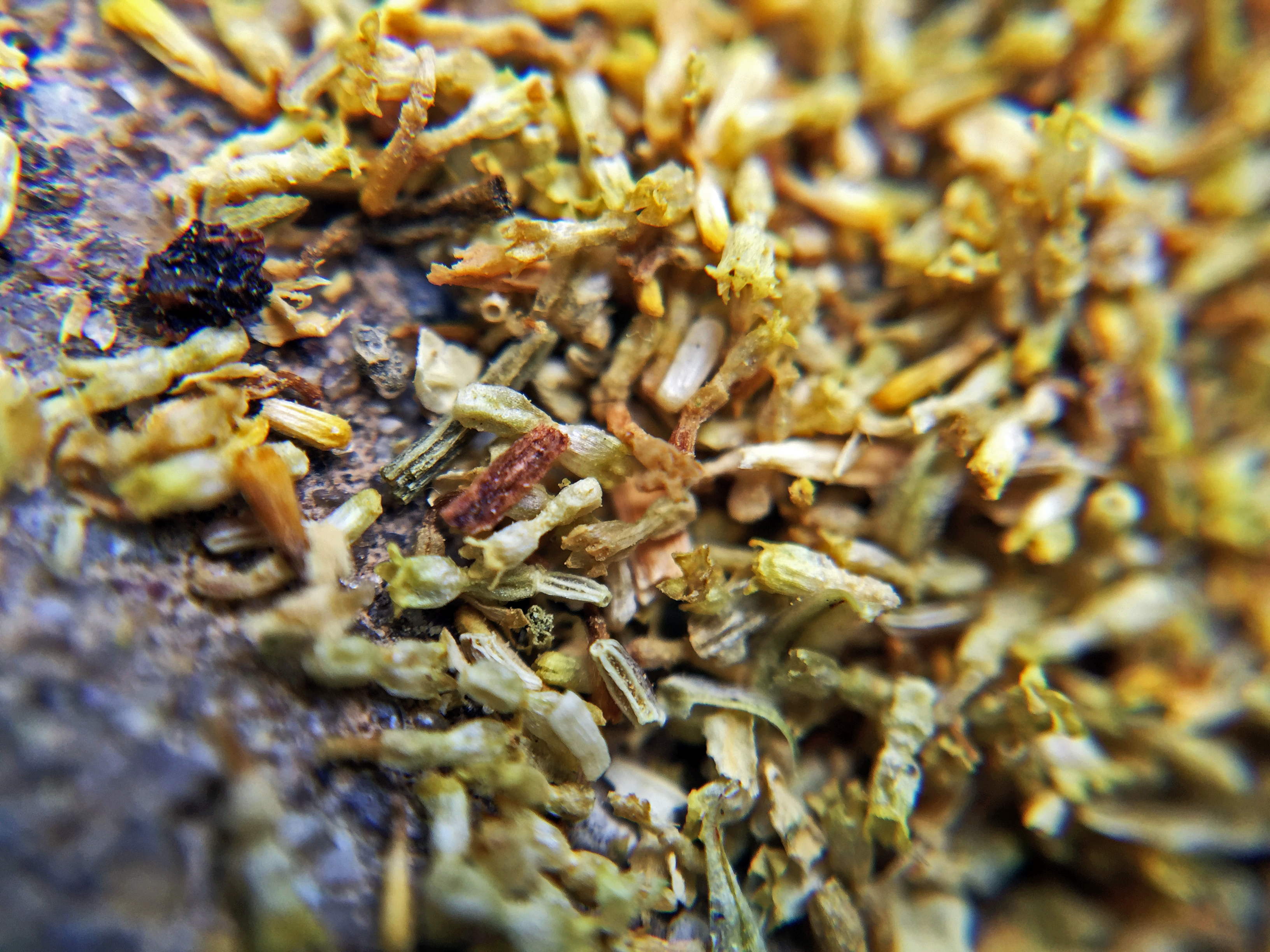 Egyptian Camomile (Metropolitan) ~ loose leaf Macro by Jocilyn Mors is licensed under a Creative Commons Attribution-ShareAlike 4.0 International License.