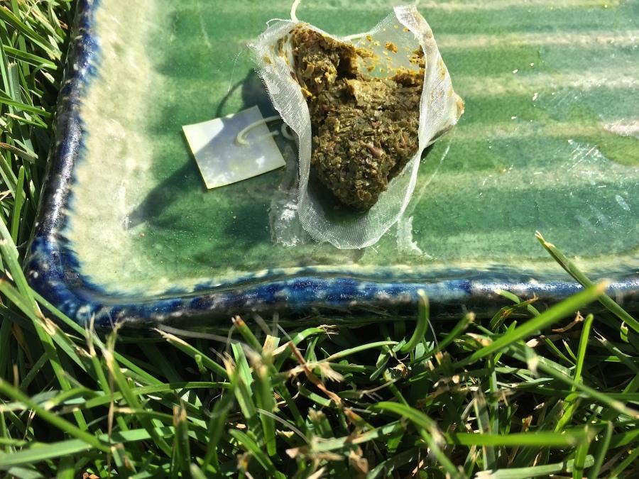 Wadmalaw Island Green (Charleston Tea Planation) ~ spent by Jocilyn Mors is licensed under a Creative Commons Attribution-ShareAlike 4.0 International License.