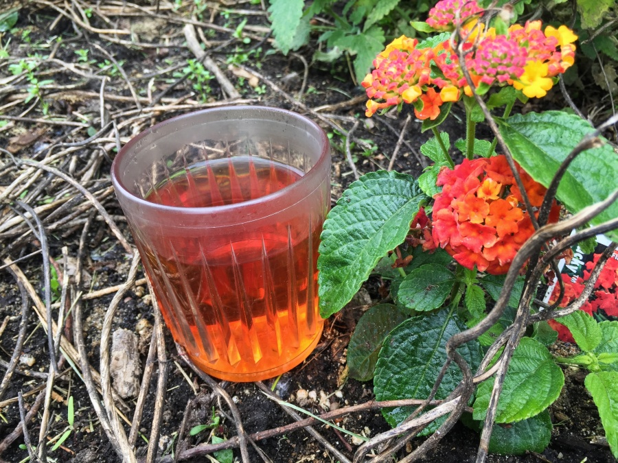 Photograph of Charleston Breakfast (Charleston Tea Plantation) ~ liquor by Jocilyn Mors is licensed under a Creative Commons Attribution-NonCommercial-ShareAlike 4.0 International License.